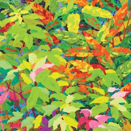 Balaams Wood - Under Growth LO