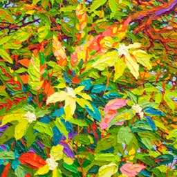 Deep in Balaams Wood Lo Web